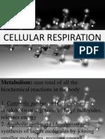 Cellular_Respiration.pptx