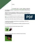 Pesquisa insetos    projeto insetario.docx