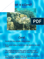 1st - What is a Coral Reef.ppt
