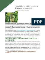 Comment Identifier Et Lutter Contre Le Mildiou de La Tomate