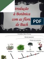 Botânica e Os Florais de Bach