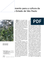 Produção-de-oliveiras-com-foco-na-produção-de-azeite-de-oliva-extravirgem