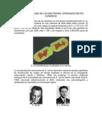 Los Cromosoma de Las Bacterias