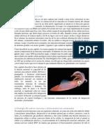 Capítulo 12. Neuronas