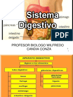 Aparato Digestivo Final