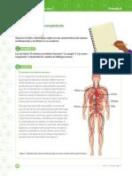 Taller sistema circulatorio.pdf