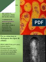 03 Tipos de Celulas