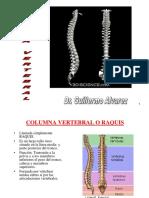 (17) Columna Vert. y Triangulos Del Cuello