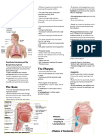 The Respiratory System Reviewer