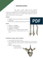 Cuestionario de Anatomia