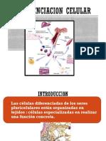 3. Receptores Señalizacion Celular