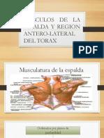 msculosdelaespalda-140601200223-phpapp02