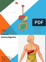Sistema Digestivo Active