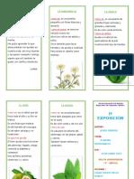 228385367-triptico-plantas-medicinales.doc