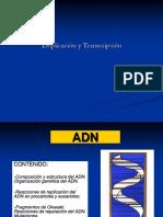 Duplicacion y Transcripcion