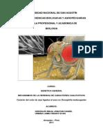 80729098-Informe-drosophila.pdf