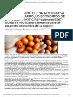 Ciruela de Virú Buena Alternativa Para El Desarrollo Económico de La Región