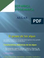 ALGAS. Criterios