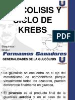 Glucolisis y Ciclo de Krebs Corregido (2)