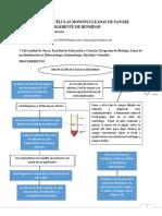 Informe 3 Contado de Celulas en Sangre