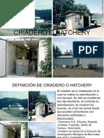 Modulo Nº1 Criadero o Hatchery