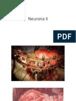 Neurona II