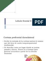 Corteza Prefrontal Dorsolateral