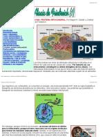 """Frataxina, proteína mitocondrial"".pdf"