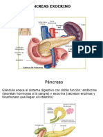 2017 CT4 Pancreas