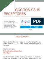 capitulo5losfagocitosysusreceptores-130331122132-phpapp02