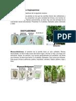 Clasificación de las Angiospermas gimnospermas.docx