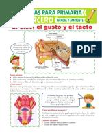 El-oído-el-gusto-y-el-tacto-para-Tercero-de-Primaria.pdf