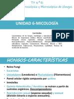 hongos características