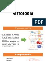 Histologia Del Sistema Endocrino