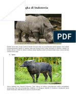 10 Binatang Langka Di Indonesia
