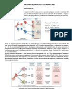 SUBPOBLACIONES DE T COOPERADORES.pdf