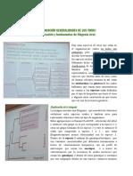 Clase 09. Clasificación y Fundamentos de Filogenia Viral.