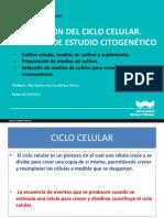 Sesion 3 Citogenetica Humana 2019 II