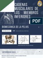 Cadenas Musculares de Los Miembros Inferiores (1)
