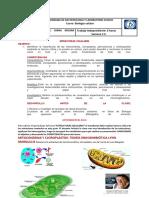 Mitoc Clorop Peroxisomas Citoesqueleto.centriolos