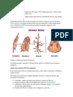 Ensayo de Biologia 2do Cuatrimestre (Huesos)