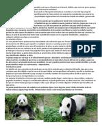 Los Osos Pandas