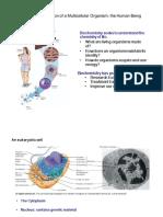 Multicellular Organsisms_ChemicalBonds(1)