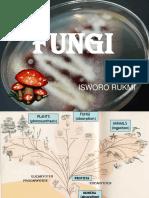 Fungi 2015