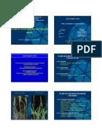 6 - Arroz_Plantas Daninhas.pdf