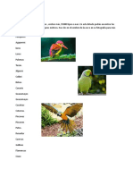 Aves Exóticas ,-WPS Office
