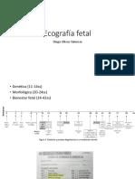 Ecografía Fetal