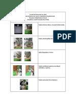 cuadros protocolos completos.docx
