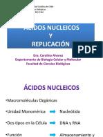 7. Ácidos Nucleicos