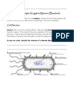 Bacteria Protist Worksheet